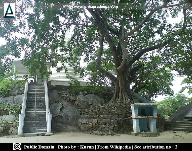 The Bodh-tree and the Stupa