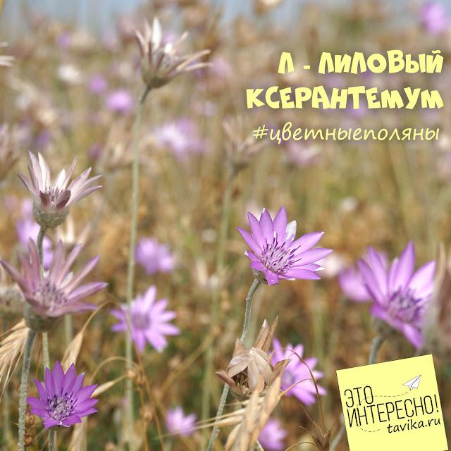 сухоцветник в Крыму