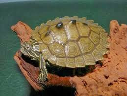 Photos kinds of turtles