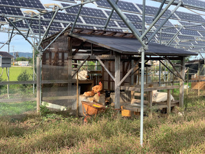 Chickens and goats on a solar sharing farm in Tsukuba, Japan