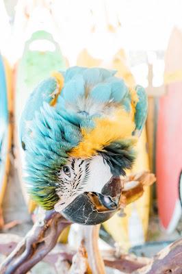 Parrot Images