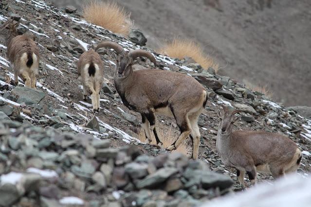 Hemis National Park, Best Places to visit in Ladakh