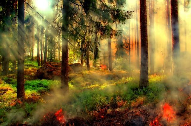 Queimada devorando um ambiente de vegetação densa