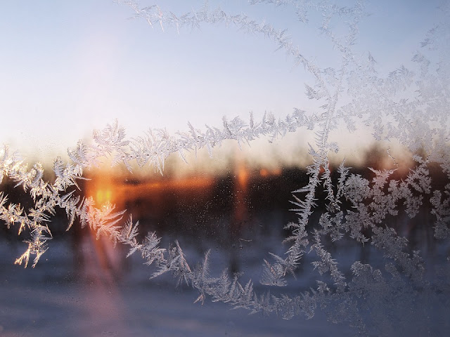 Winter Snow Frost, by Martina Green on Pixabay