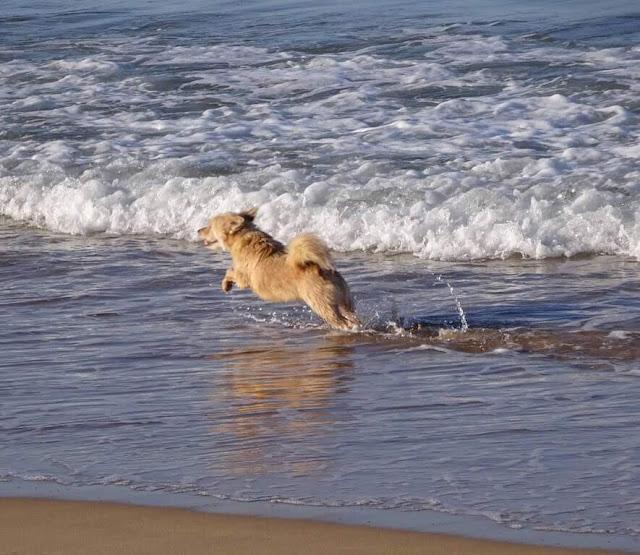 Praia da Rocha (Algarve )