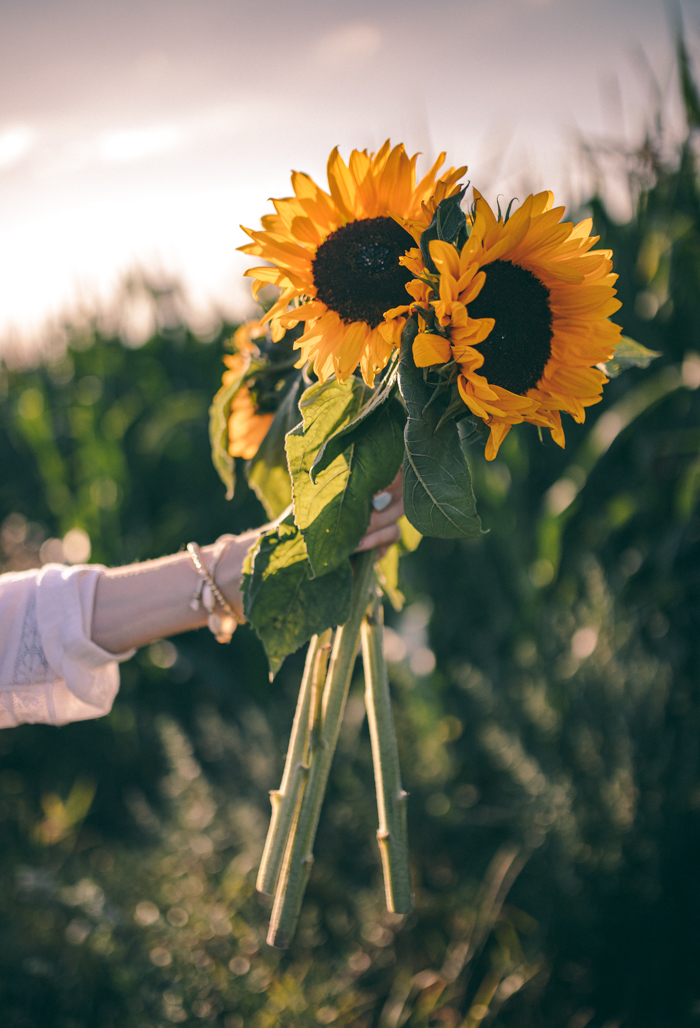 sunflowers in hand