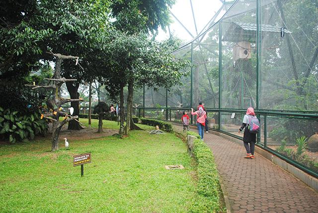 Taman Burung, Taman Mini Indonesia Indah TMII, Koleksi ...
