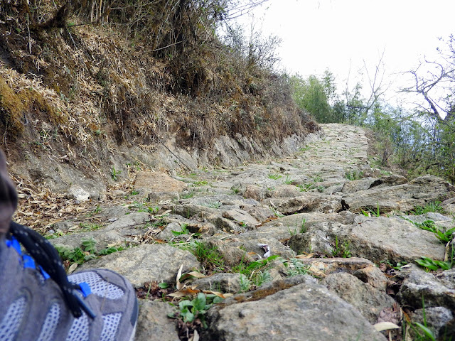 Somewhere at the start of the trek to Sandakphu | April 2016