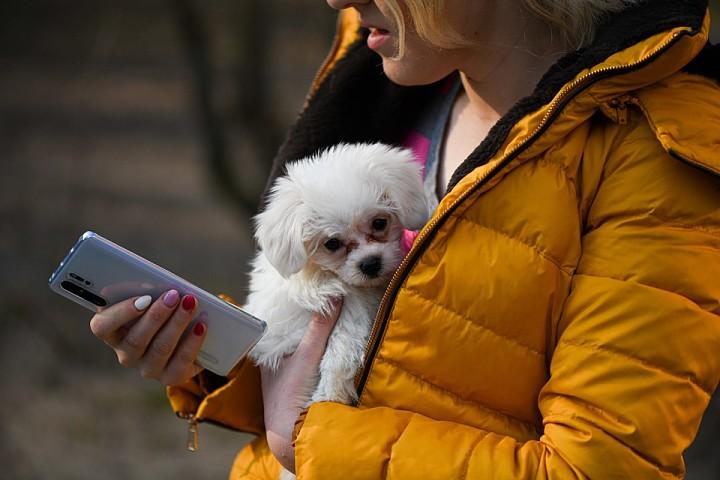 Aplicaciones para cuidar la salud de tu mascota