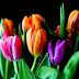 Tips Merawat Bunga Potong Agar Tetap Segar