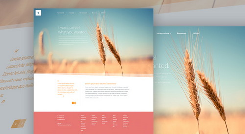 Organic – Web Template (PSD)