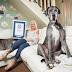 Royaume-Uni. Le plus grand chien du monde, Freddy, vient de mourir