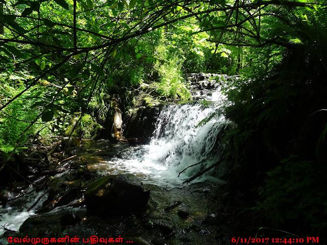Angels Rest Trail - Creek