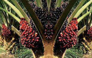 Dibutuhkan Segera di Group Perusahaan Perkebunan Kelapa Sawit Bandar Lampung Mei 2018