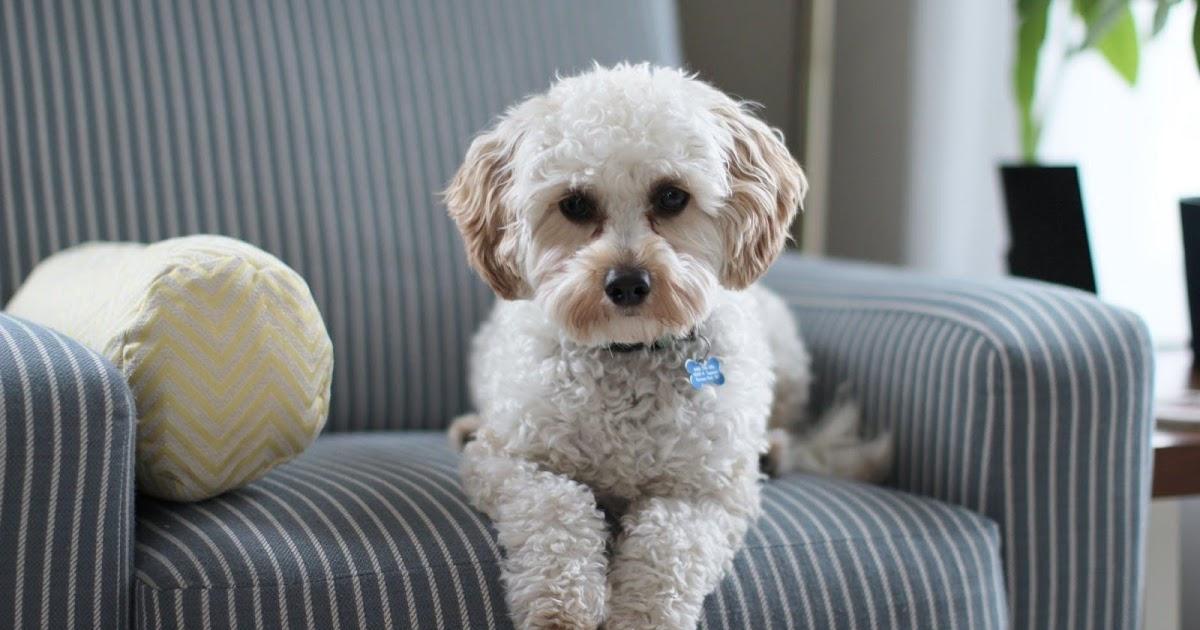 5 secretos para hacer que su apartamento sea más apto para mascotas 47