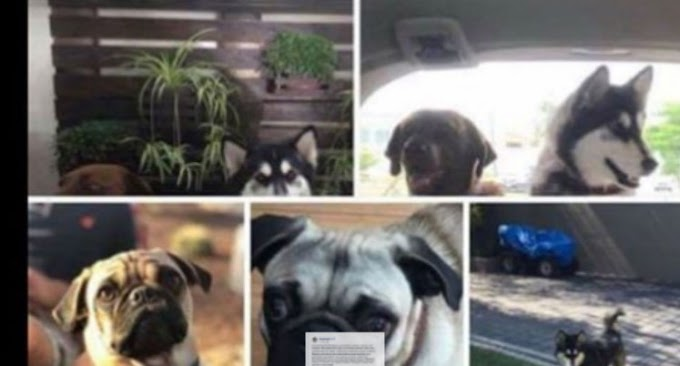 Delincuentes armados roban camioneta con todo y 4 perritos; dueños piden ayuda para localizarlos