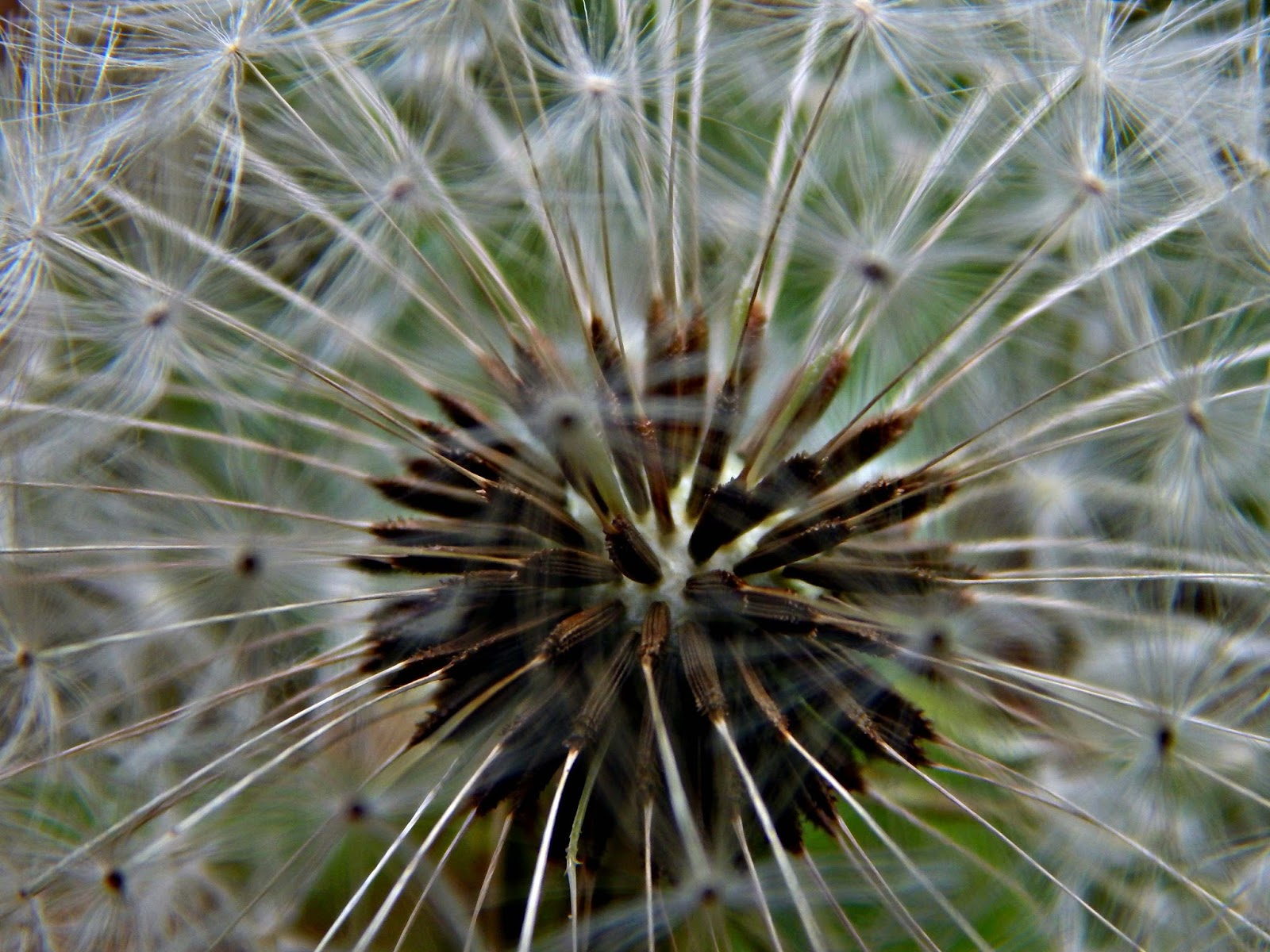 Lucys photography: Natural forms