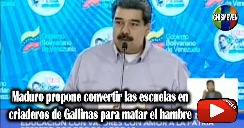 Maduro propone convertir las escuelas en criaderos de Gallinas para matar el hambre