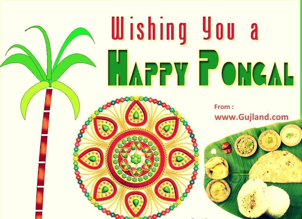 Newhappy Pongal 2019 Sankranthi 2019 Best Wishes Images
