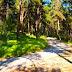Σε ποια δάση της Θεσπρωτίας απαγορεύεται η κυκλοφορία
