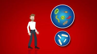 Beneficios Lactobacillus Casei Shirota