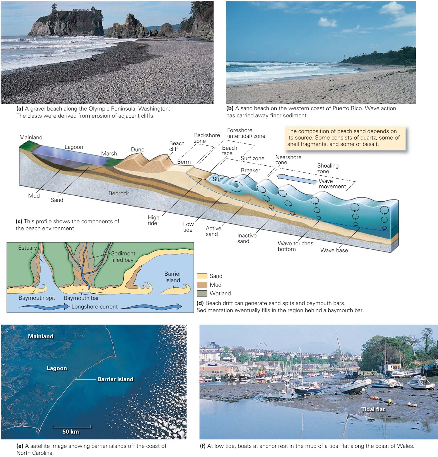 Worksheet Sea Shore
