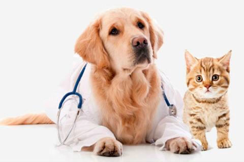 Veterinária ou Medicina Veterinária