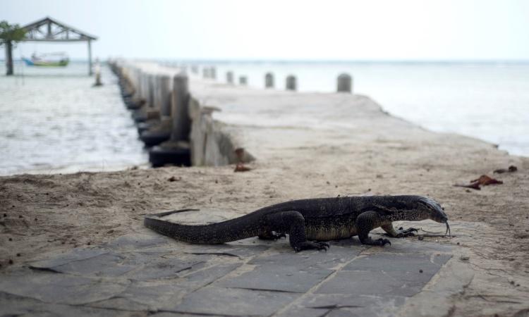 Menikmati Keindahan Alam Eksotis Pulau Biawak di Indramayu