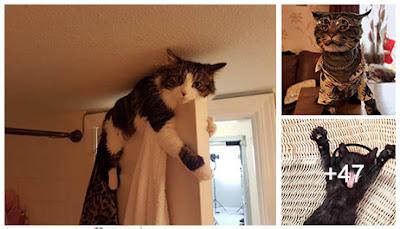 Fotos de gatos divertidas #1