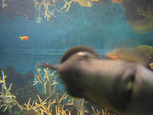 photobombing fish
