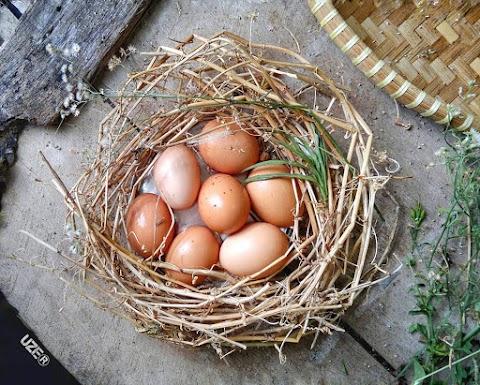 22 Olahan Telur di Masa Pandemik