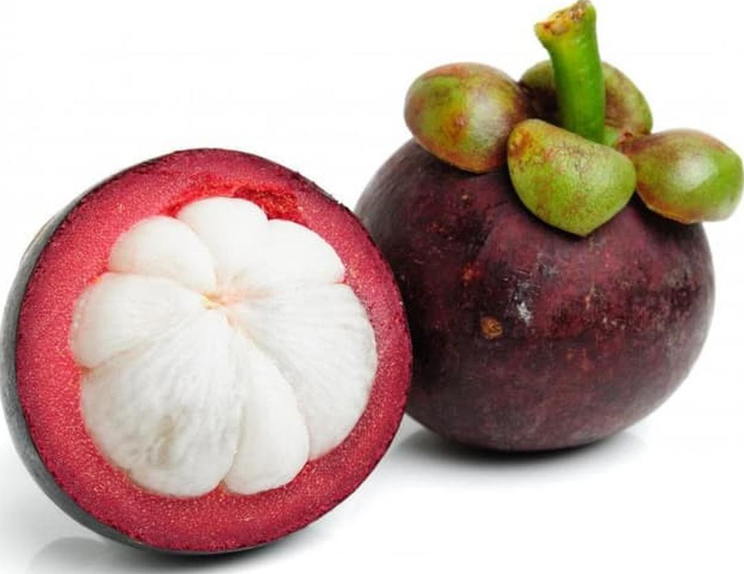 Stok banyak! bibit tanaman buah anggur Termurah Bisa Cod Kota Bandung #bibit buah genjah murah