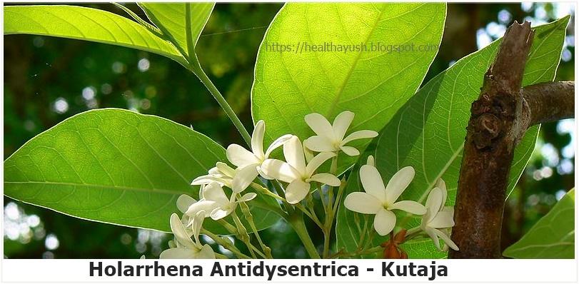 Health Ayurveda