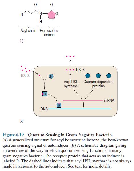 Quorum Sensing in Gram-Negative Bacteria