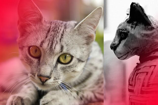 قصه القط الفرعوني