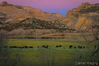 Cramer Imaging's fine art landscape photograph showing cows grazing in a field against the rock faces of Escalante Utah