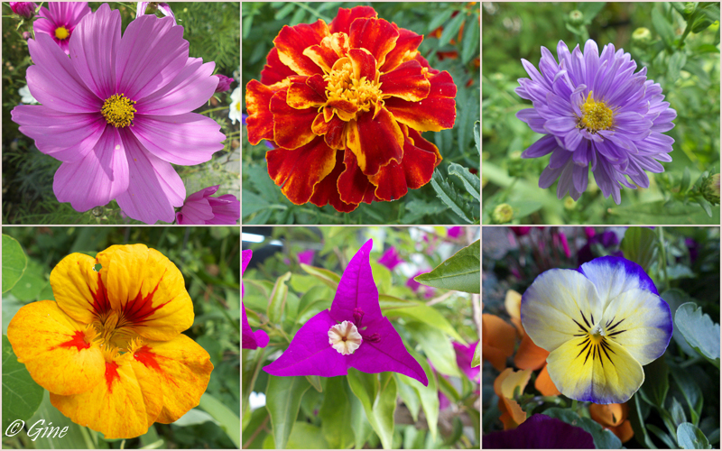 au jardin de gine: août et fin septembre passés