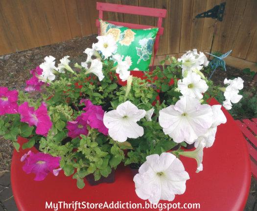 Half price petunias