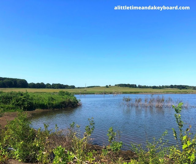 Wetlands in Arthur L. Janura Preserve welcome wildlife.