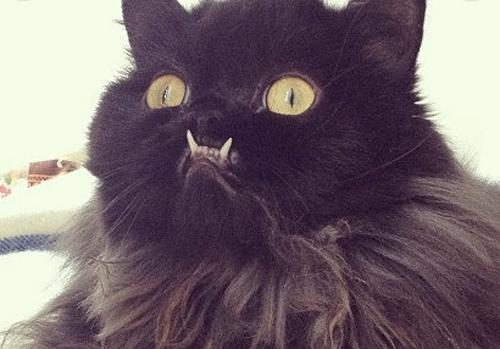 Death Metal Cats : 1000 images about funny stuff on pinterest black metal death metal and heavy metal ~ Vivirlamusica.com Haus und Dekorationen