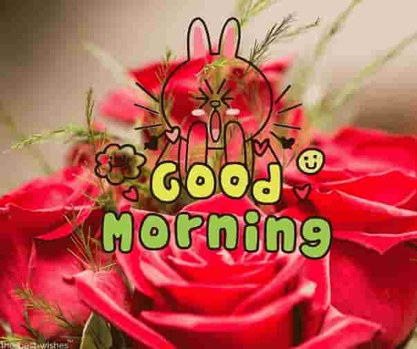 good morning with roses images
