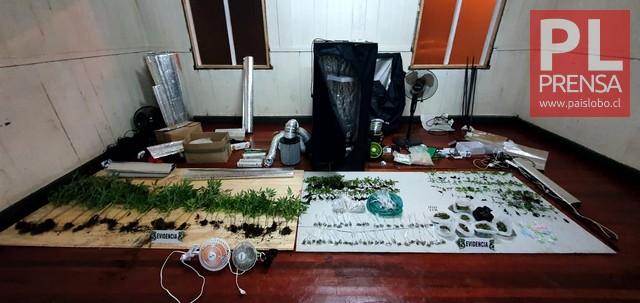 "Incautan 430 plantas de marihuana en ""Litran"""