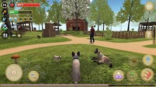 Cat Simulator 2020 v 1.08 MOD APK (Unlimited Money / No ads)