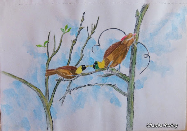 watercolour art of red bird of paradise
