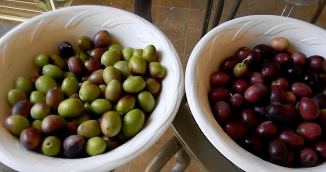 Cara Menurunkan Berat Badan Dengan Minyak Zaitun