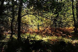 Zwischen den herbstlichen Bäumen erstrahlt die Sonne