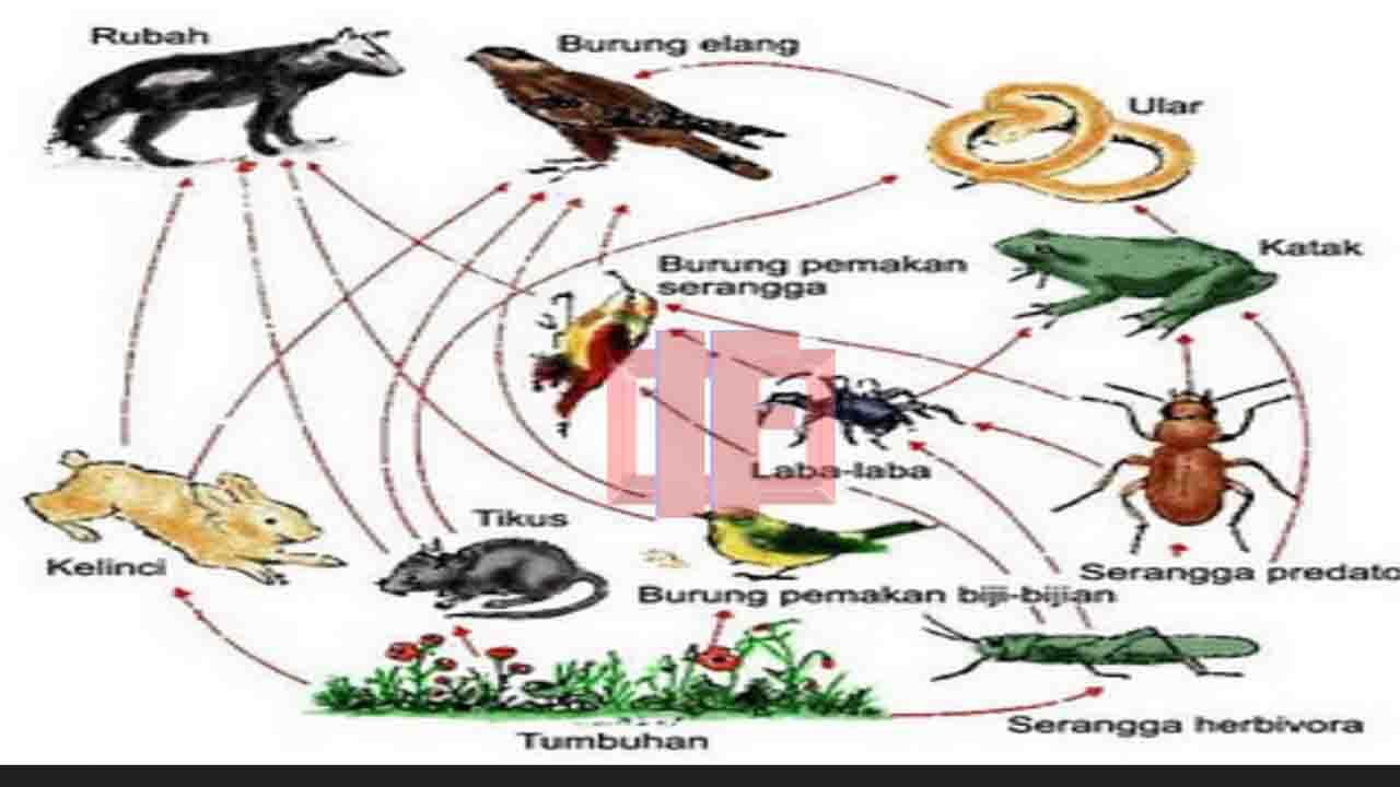 Komponen Ekosistem Biotik dan Abiotik Beserta Contoh dan Fungsinya