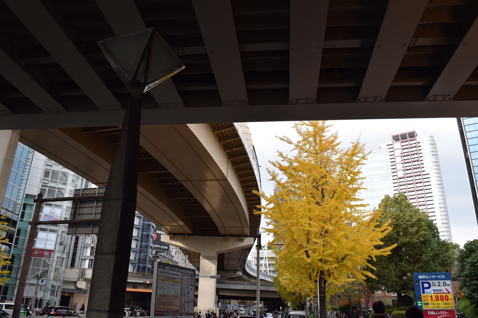 Elevated highway and gingko tree in Osaka, Japan