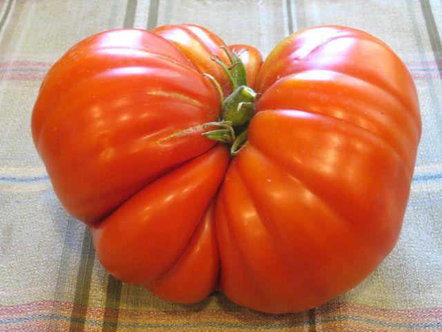 Our 2017 Tomato Garden