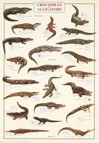 Crocodilos e Jacarés